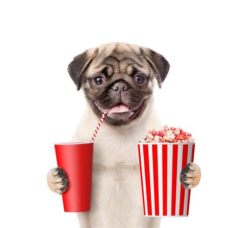 Pug-Movies