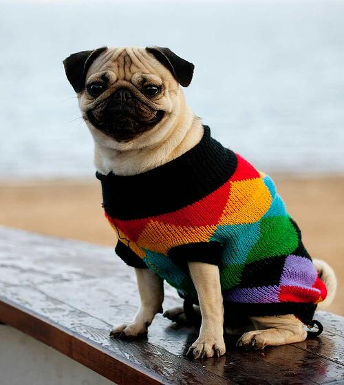Pug-Sweater
